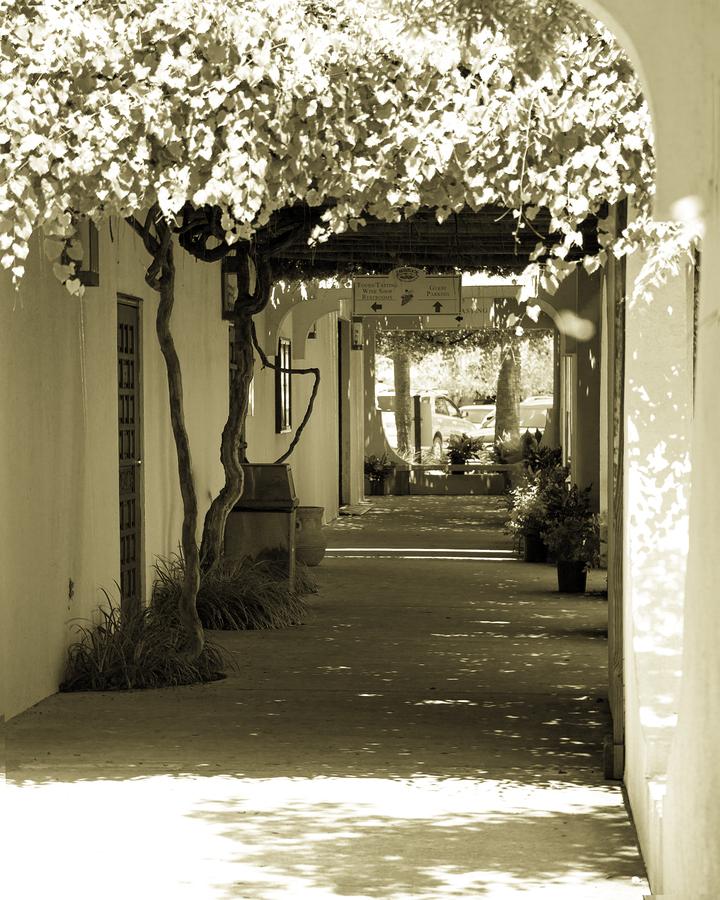 Top 6 Winery And Vineyard Wedding Venues In Florida Lake
