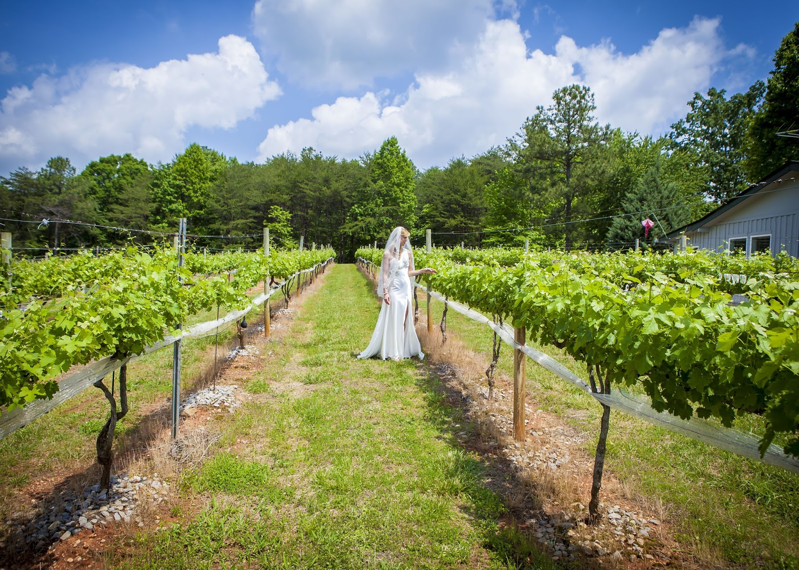 Top 6 Winery And Vineyard Wedding Venues In Georgia Sharp Mountain Vineyards 003