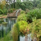 Coastal Georgia Botanical Gardens Archives The Celebration Society