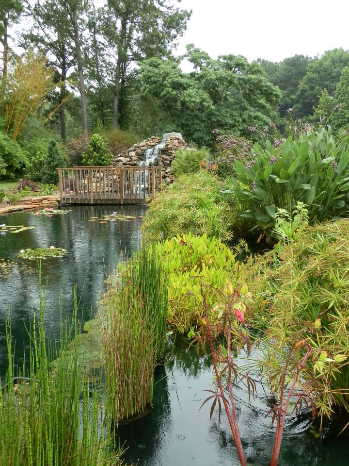 Merveilleux Coastal Georgia Botanical Gardens Water Garden