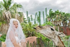 Tampa's-Lowry-Park-Zoo-Wedding-Venue-Bride