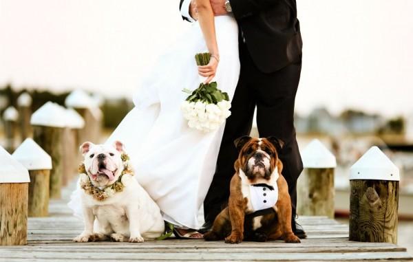 Mika And Joe Wedding.Pet In Wedding By Joe Mikos Photographers The Celebration Society