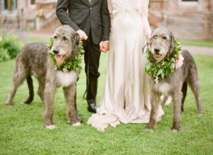Pets in wedding 3