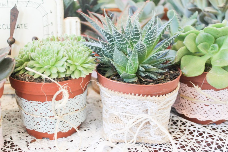 Southern Vintage Baby Shower-favors succulents mixed ribbons