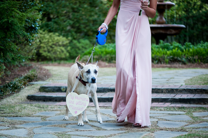 Wedding Dog Walking down Aisle