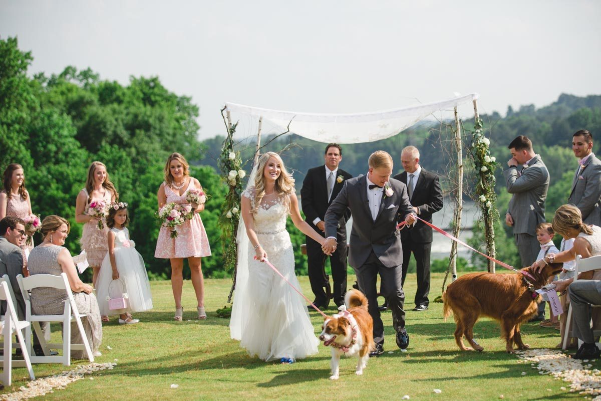 Dogs down the aisle after ceremony ErinStephan_255