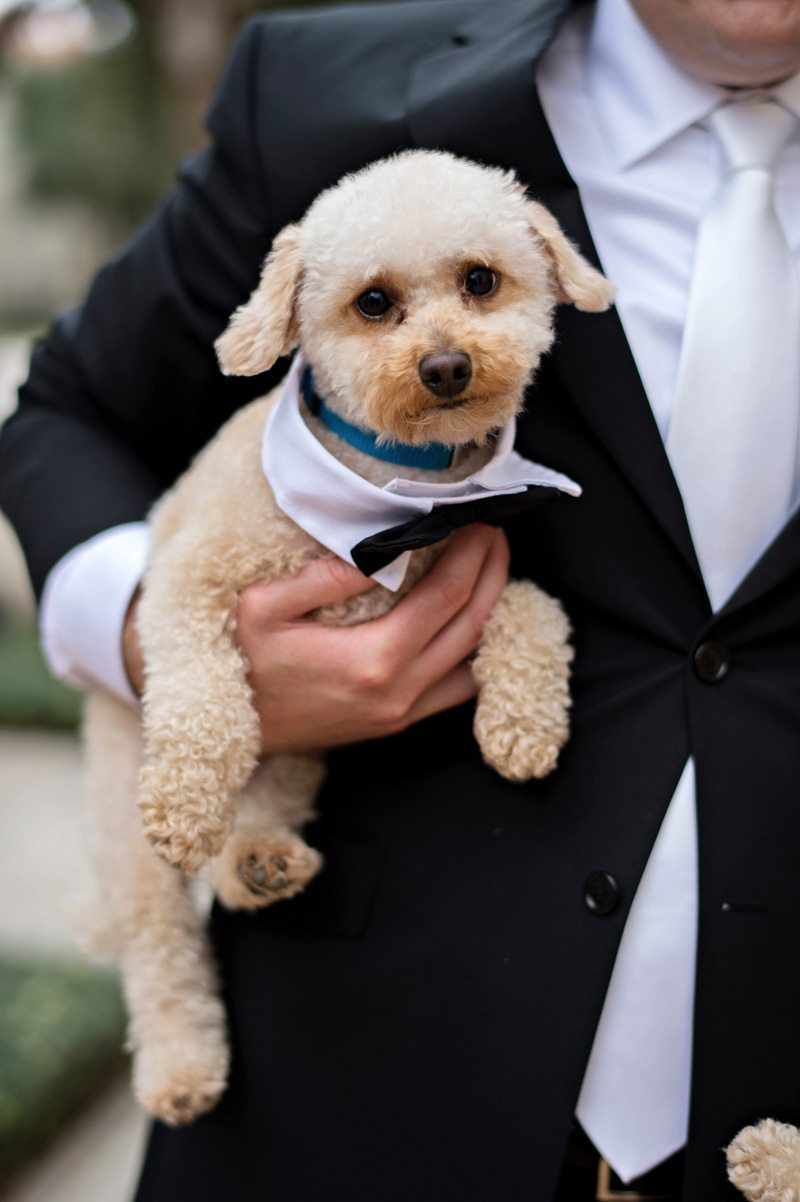 Puppy with bowtie Barry_Bailey_Kristen_Weaver_Photography_KWPSGBA1008