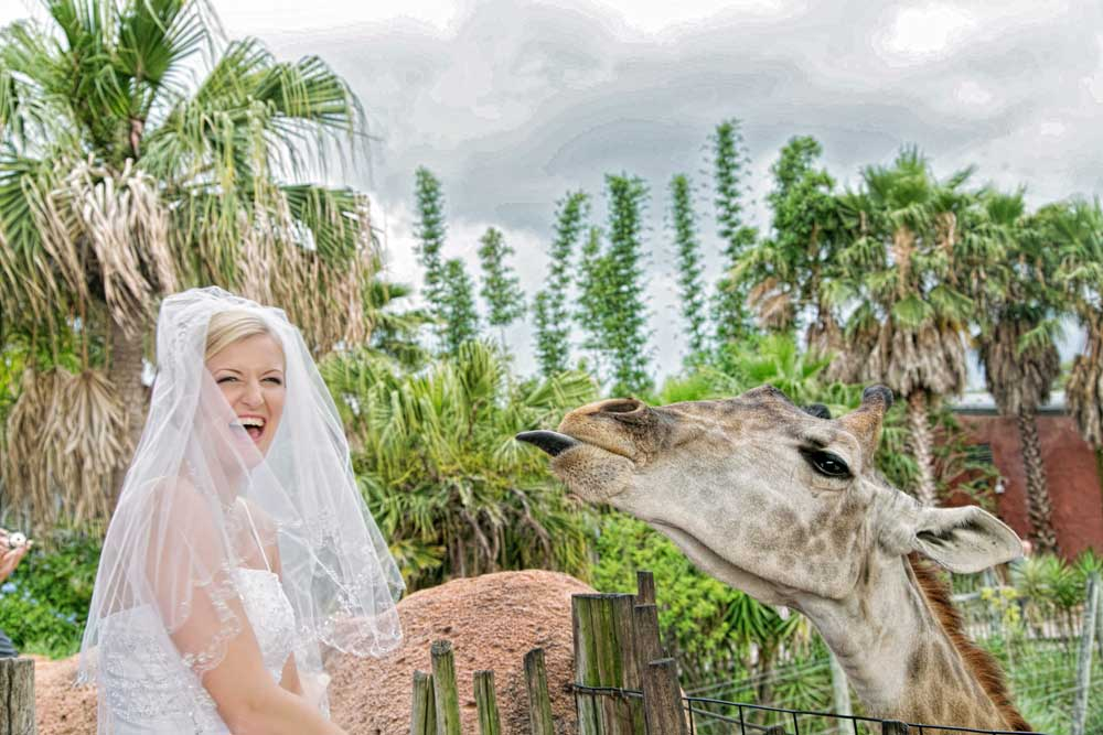 5 wedding venues in tampa fl to visit before you choose