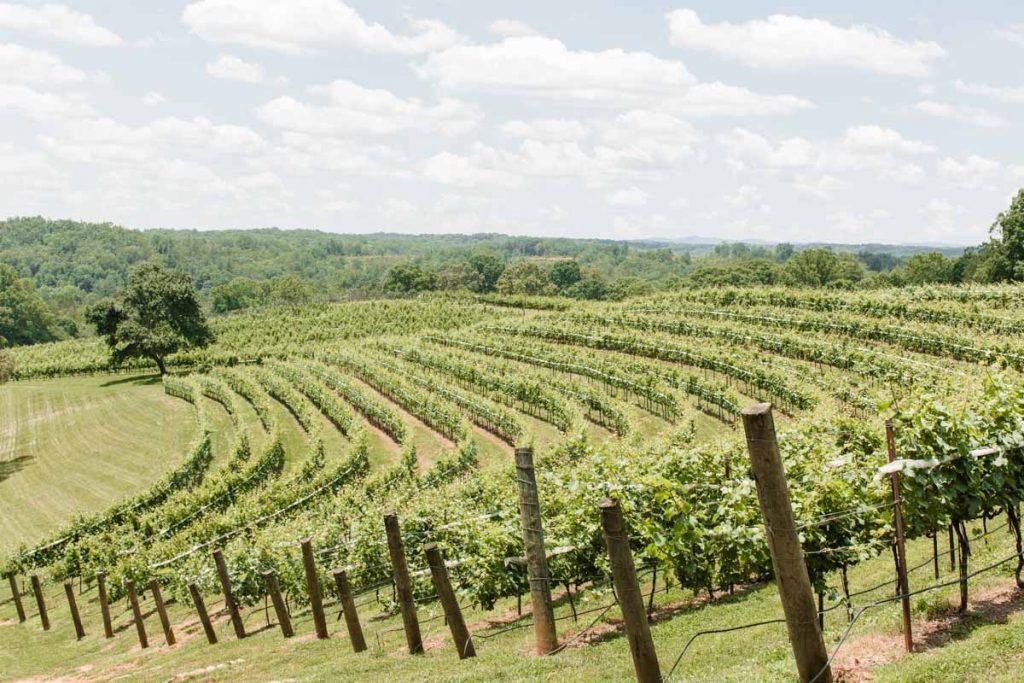 Vine landscape view with wooden poles