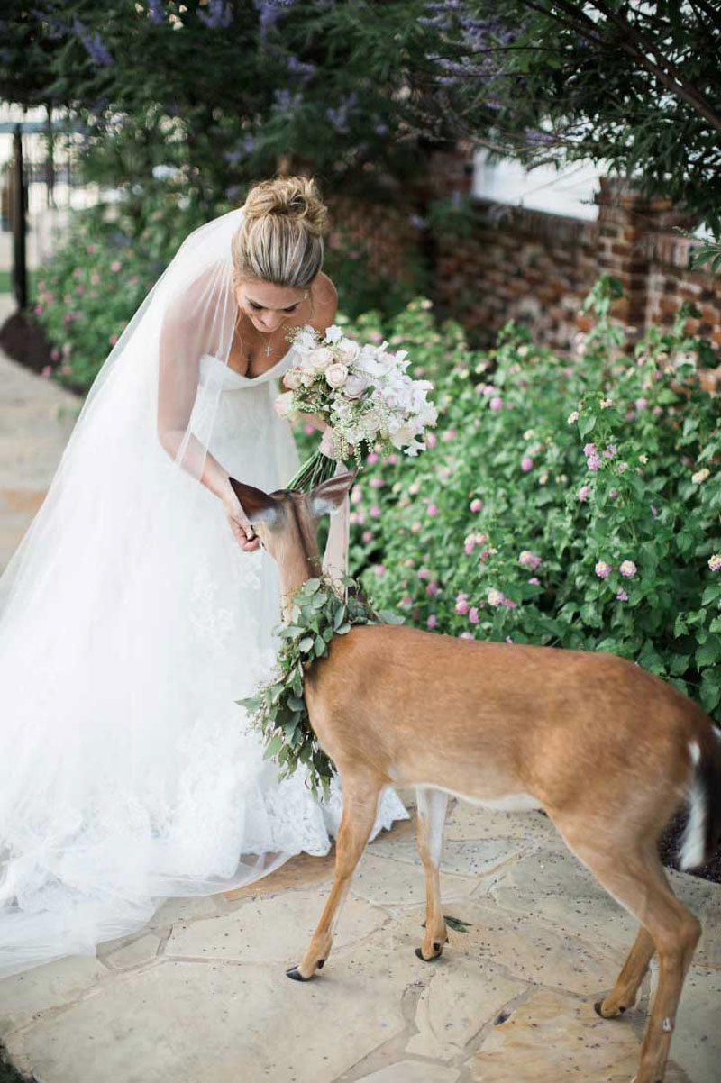 Meghan-C-Bishop-Wedding-Planning-Deer copy