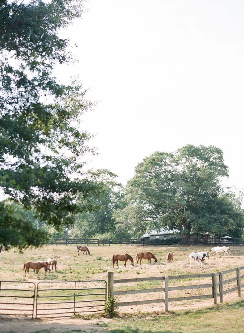 horses-anna-shakleford-46