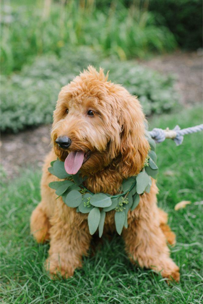 allie matthew the blackstone hotel chicago wedding dog with greenery collar