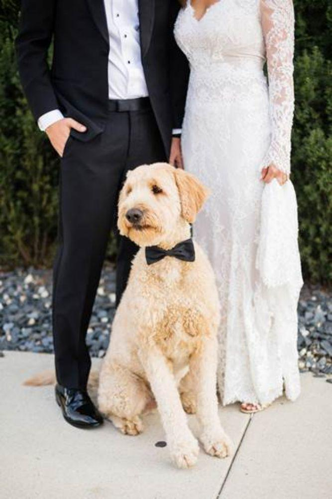 how to include your dog in your wedding